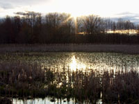 Saving the Great Swamp - Great Swamp National Wildlife Refuge